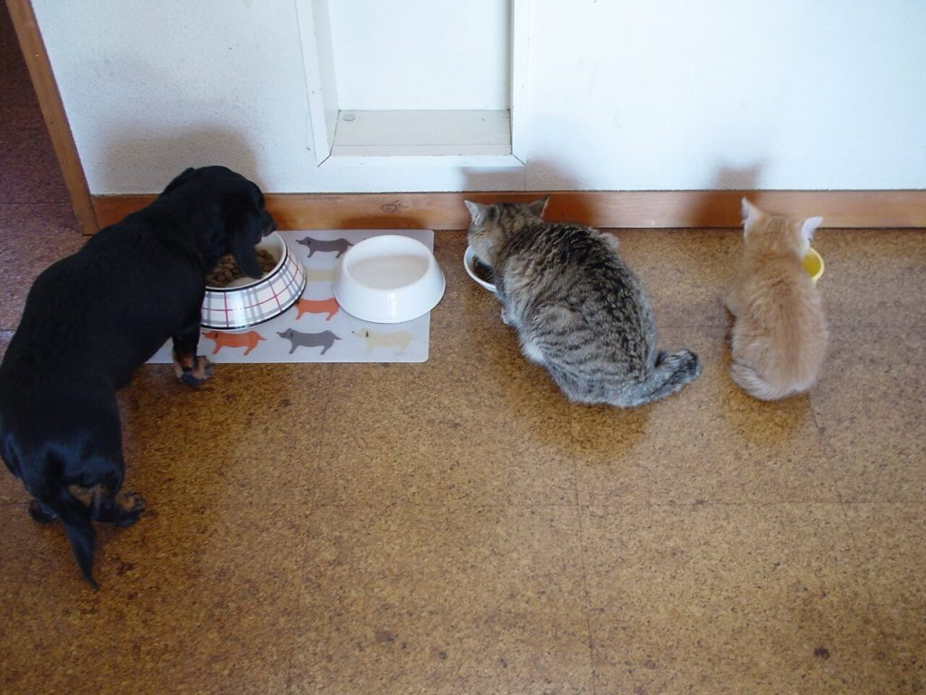 Can Dog Eat Dry Cat Food