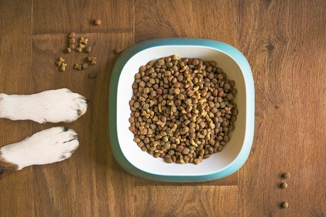 Can Dry Dog Food Go Bad in Heat