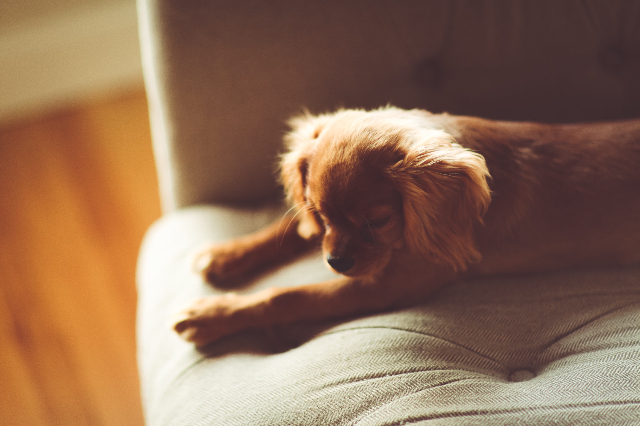How to Clean Pet Hair from Couch