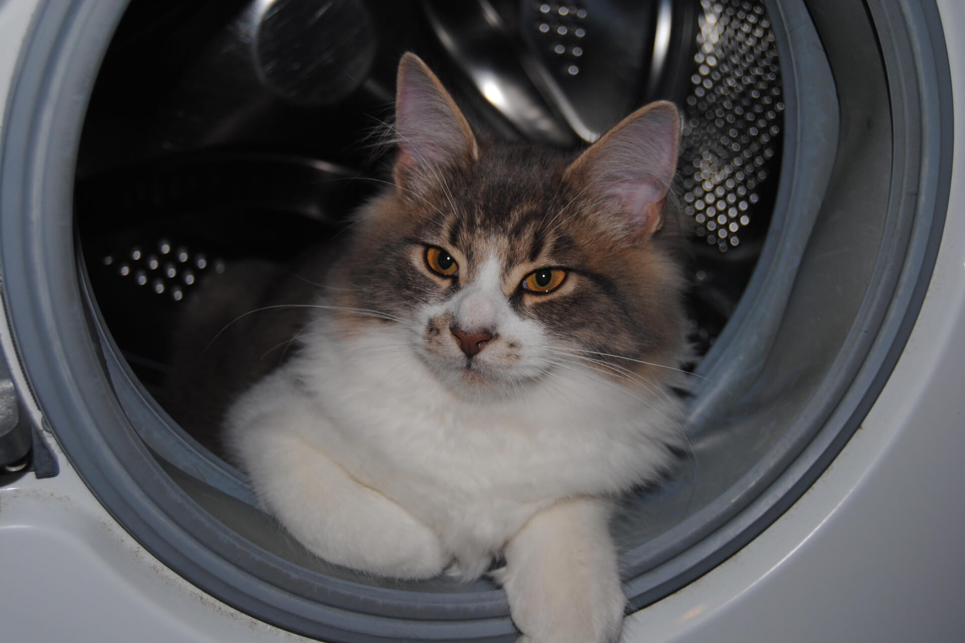 How to Get Rid of Dog Hair in Washing Machine