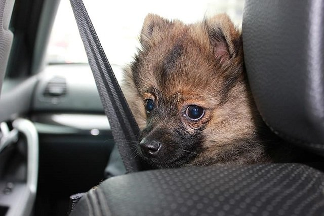How to Clean Pet Hair from Car