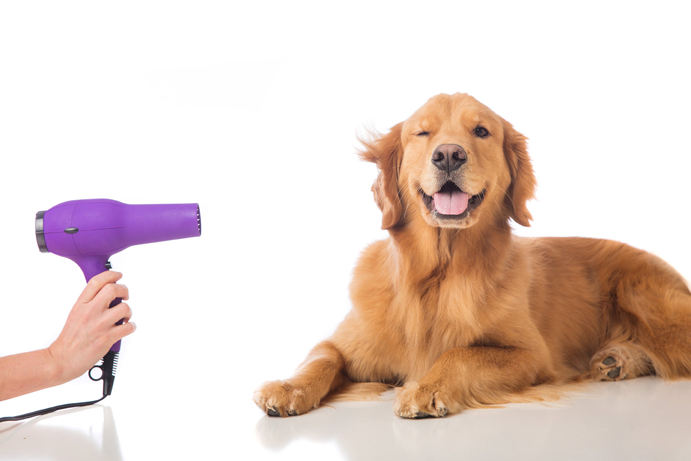 How to Get Rid of Dog Hair in Dryer